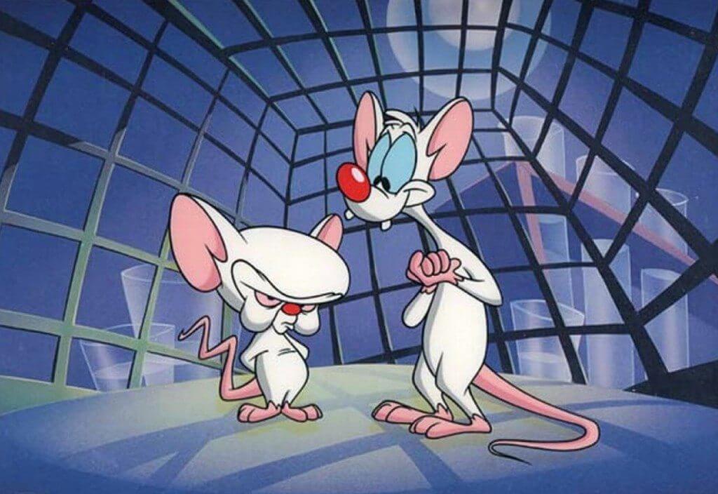 pinky y cerebro - Células humanas são usadas para criar ratos mais inteligentes