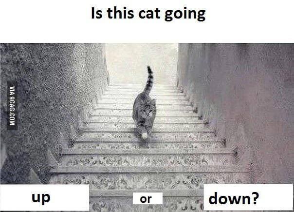 Dilema do gato