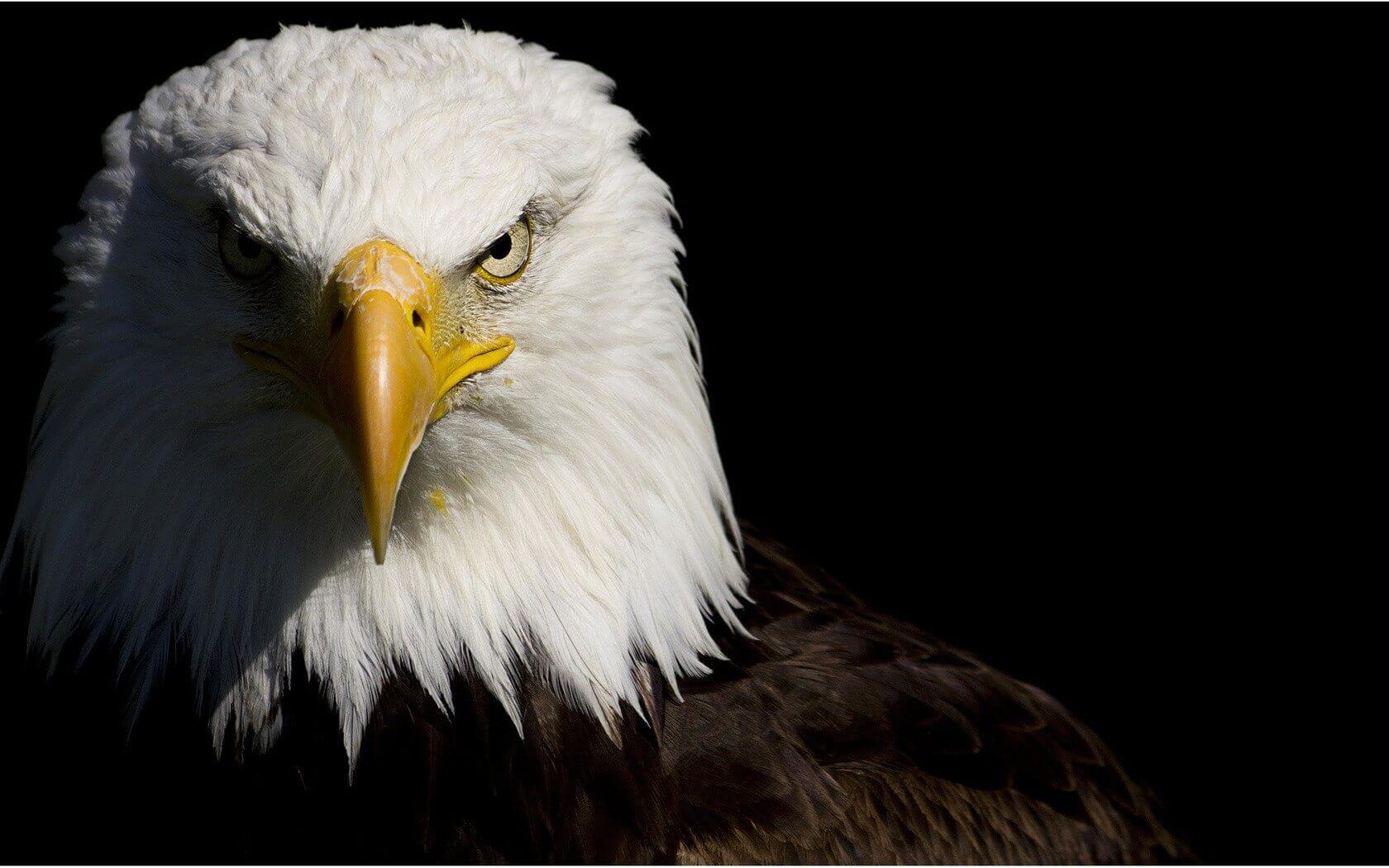 smt drones eagle