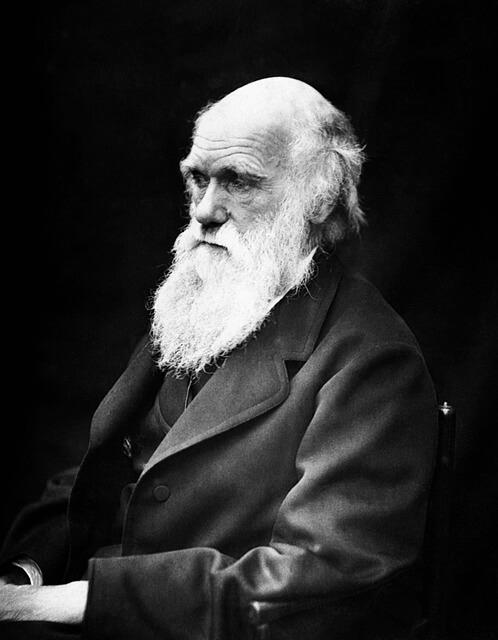 """Há 159 anos, """"A Origem das Espécies"""" era publicada por Darwin 2"""