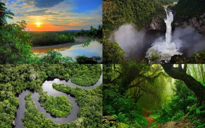 Imagens do amazon rainforest para windows 10