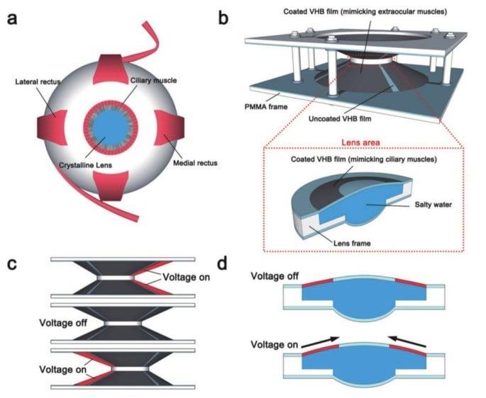 As novas lentes de contato inteligentes funcionam através da medição de impulsos elétricos