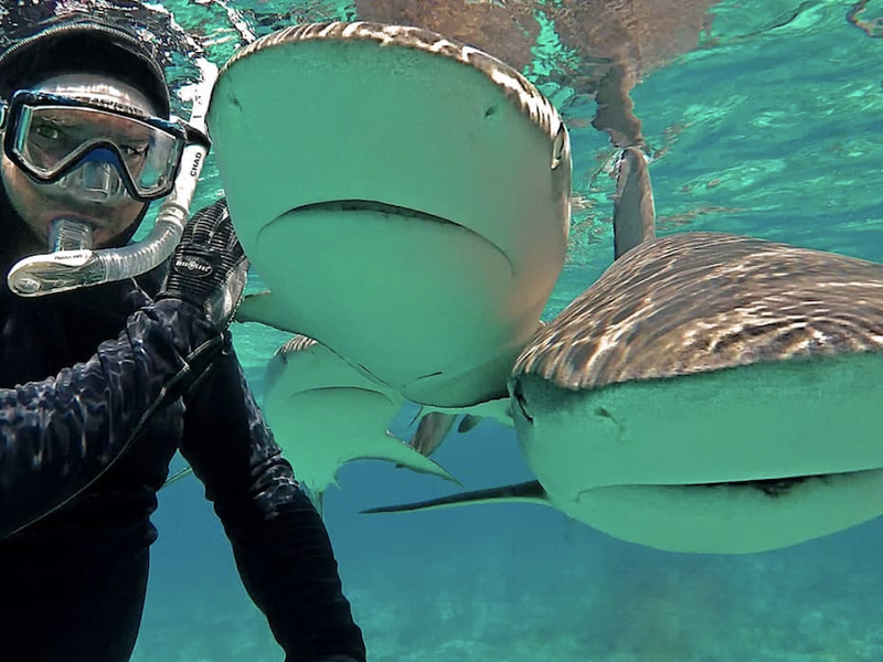 selfies com tubarões