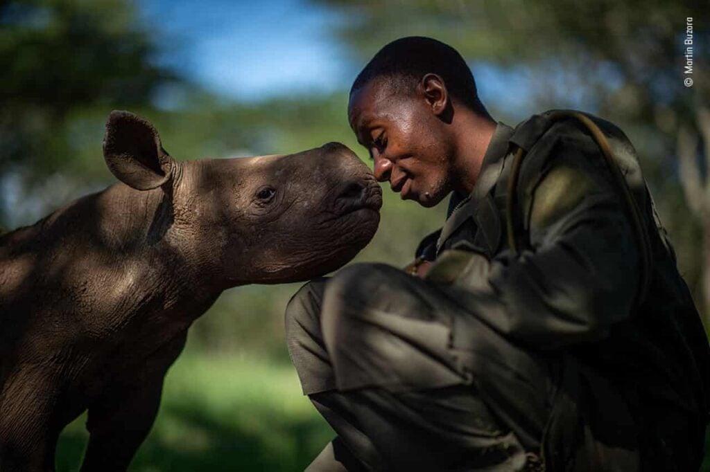 Na imagem, à esquerda há um filhote de rinoceronto. À direita, um homem. O nariz deles se tocam. O fundo da foto está desfocado.