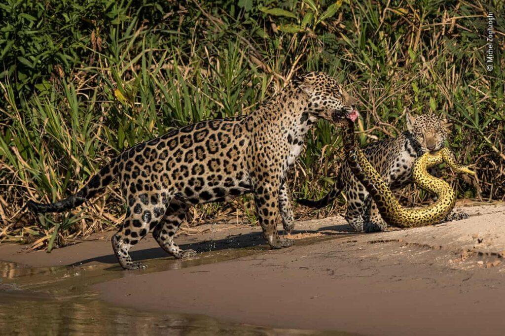 Michel Zoghzoghi 2019 prêmio wildlife