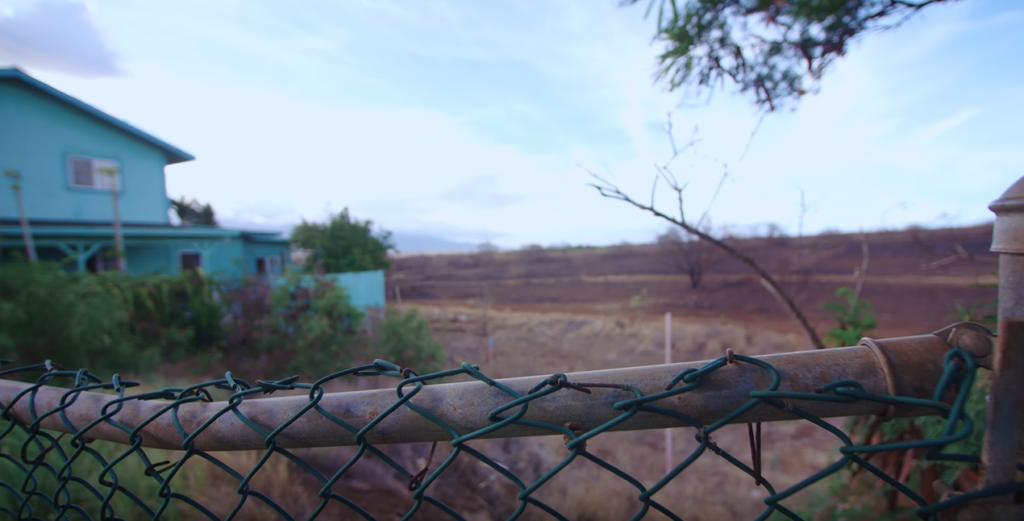 Cultivo de plantações de transgênicos é feito próxima às residências no Havaí. Reprodução: Glad You Asked.