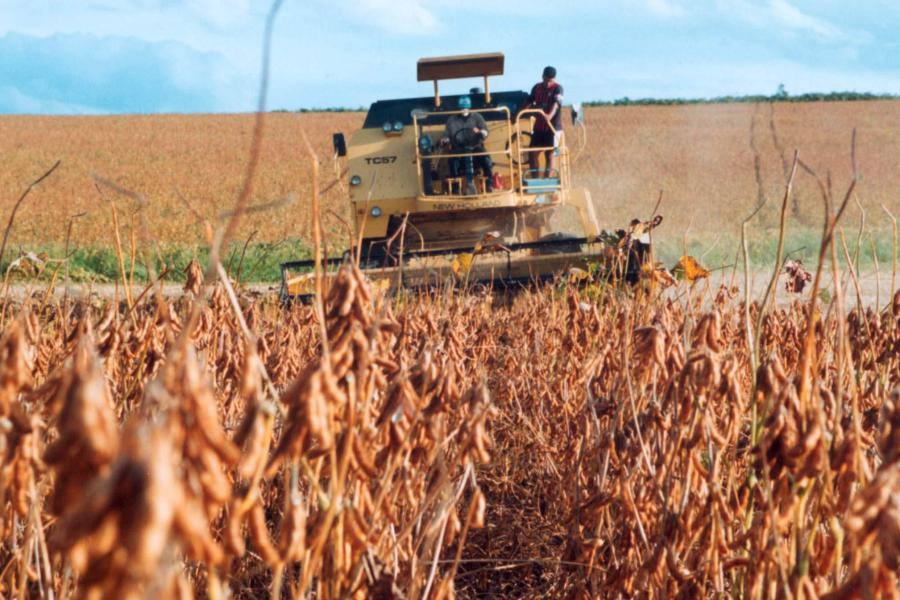 Plantação de soja. Reprodução: globo rural.