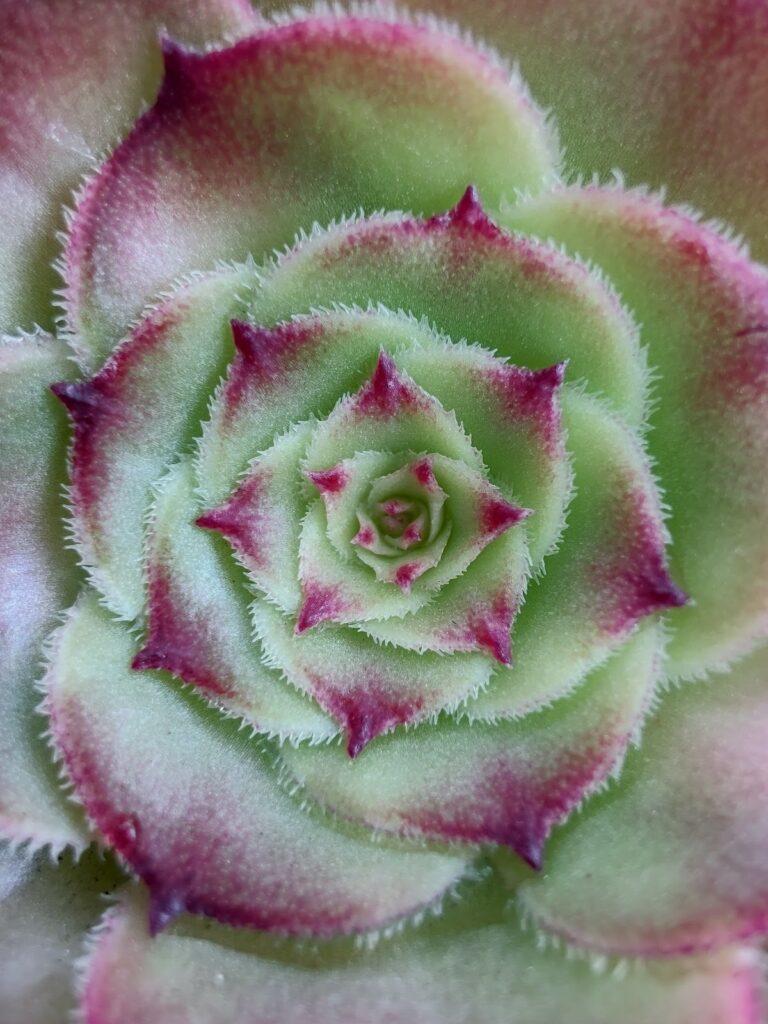 Foto de flor tirada com Motorola Edge+