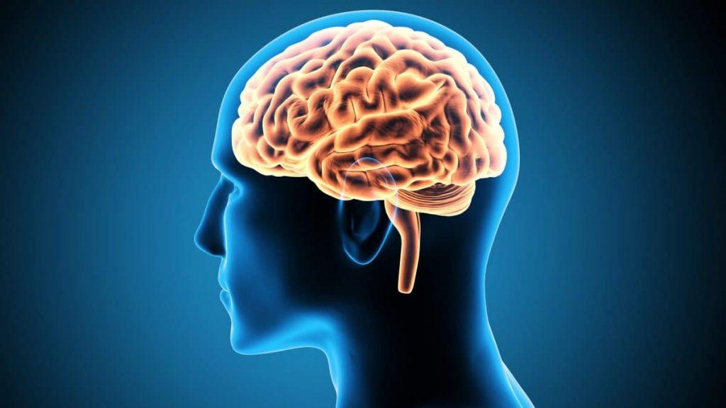 freud cérebro