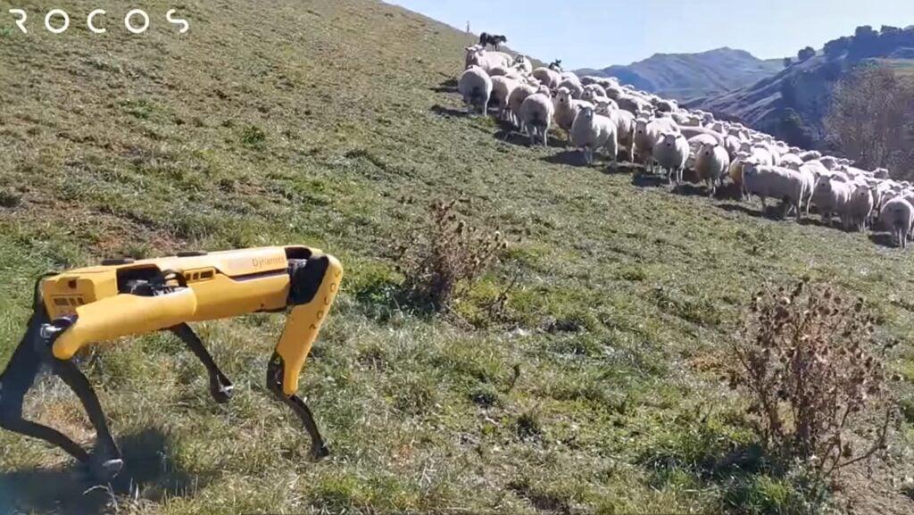 Cachorro robô auxiliando o gado em fazenda