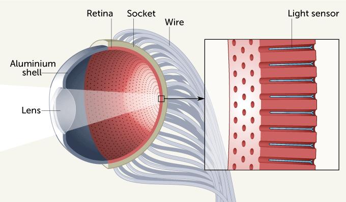 Estrutura do olho artificial criado pelos cientistas