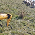 Cachorro robô Boston Dynamics