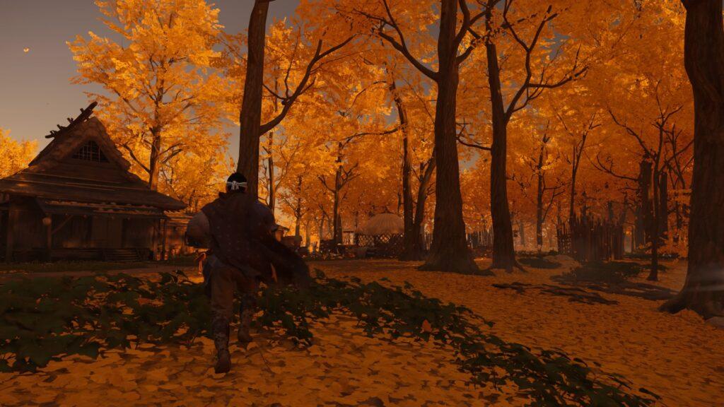 Jin corre entre árvores de folhas amarelas.