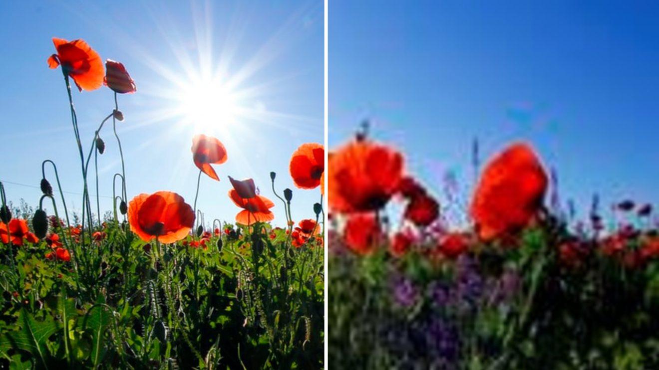 Sites gratuitos permitem redimensionar imagens