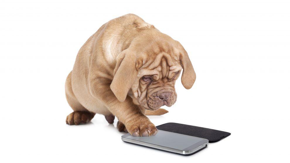Aplicativos para cuidar de cachorros. Cachorro digita em um celular.