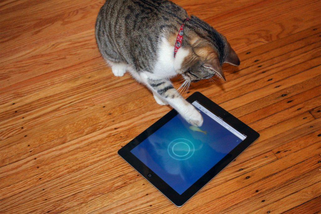 Aplicativos excelentes para gatos 4