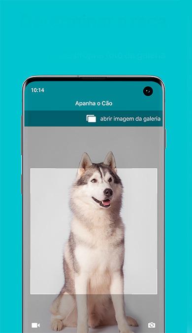 Captura de tela do aplicativo dog scanner