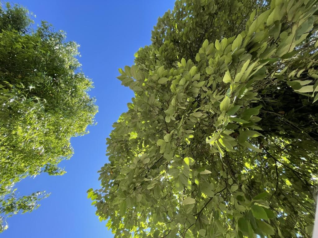 Foto feita com o iphone 12 mini de árvores e céu azul