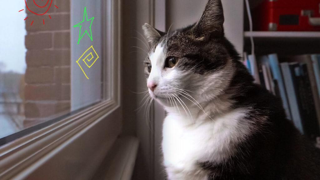 O gato-celebridade abatutu é a estrela de para os felinos que amamos