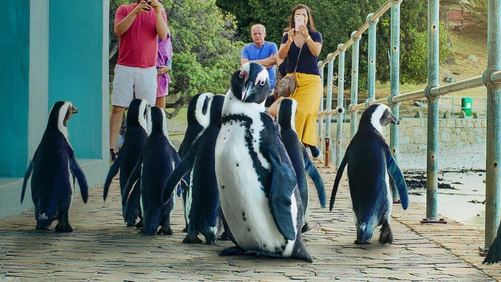 Cidade dos pinguins mostra um grupo das simpáticas aves que está sob risco de extinção