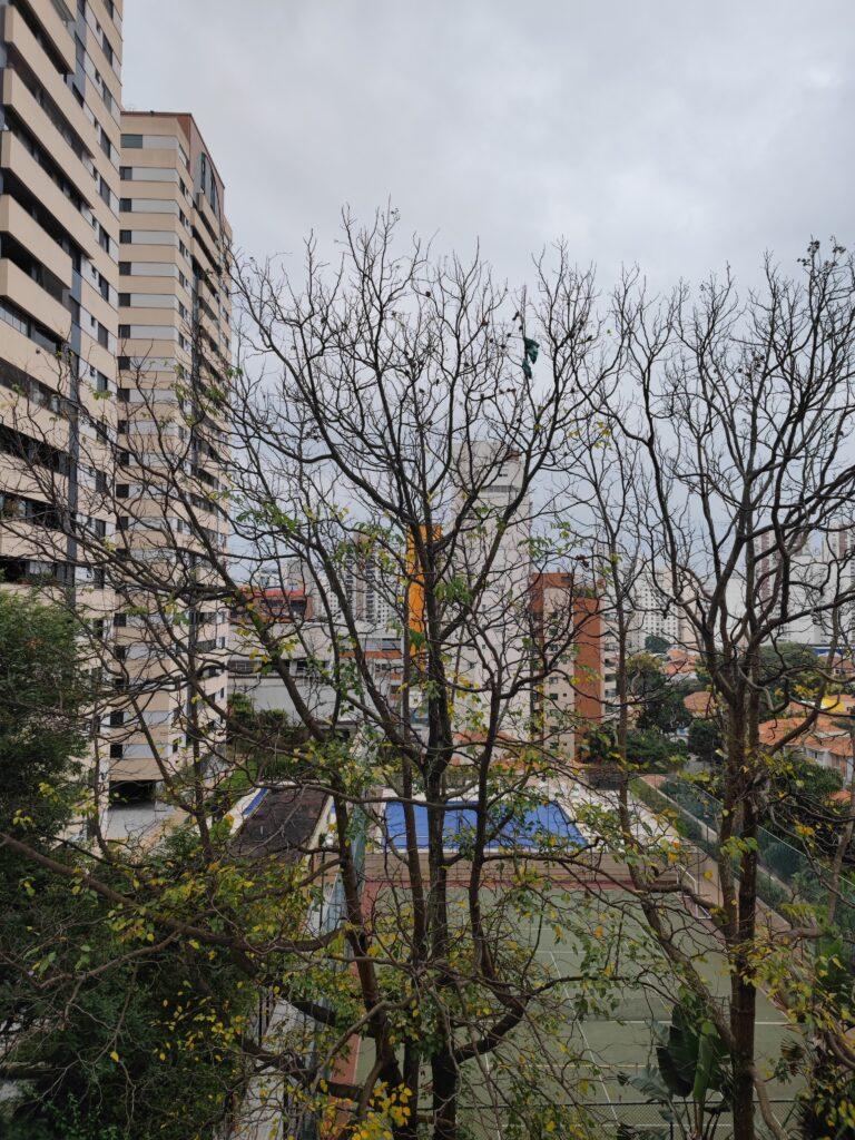 Teste de câmera mi 11 ultra 1x árvore