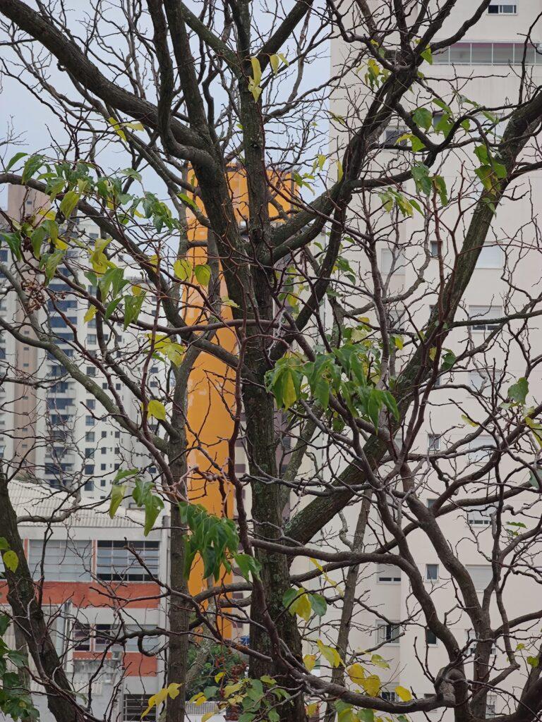 Teste de câmera mi 11 ultra 5x árvore