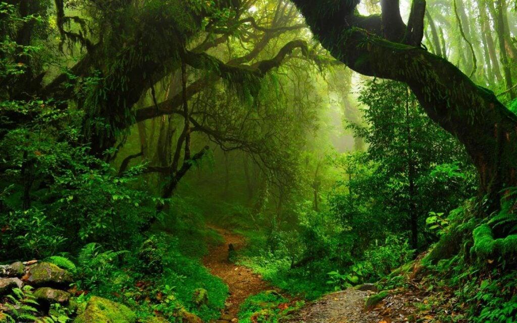 Aprecie as profundezas exuberantes do rio amazonas, a folhagem verdejante de tortuguero e mais maravilhas naturais neste conjunto de 18 imagens para windows 10.