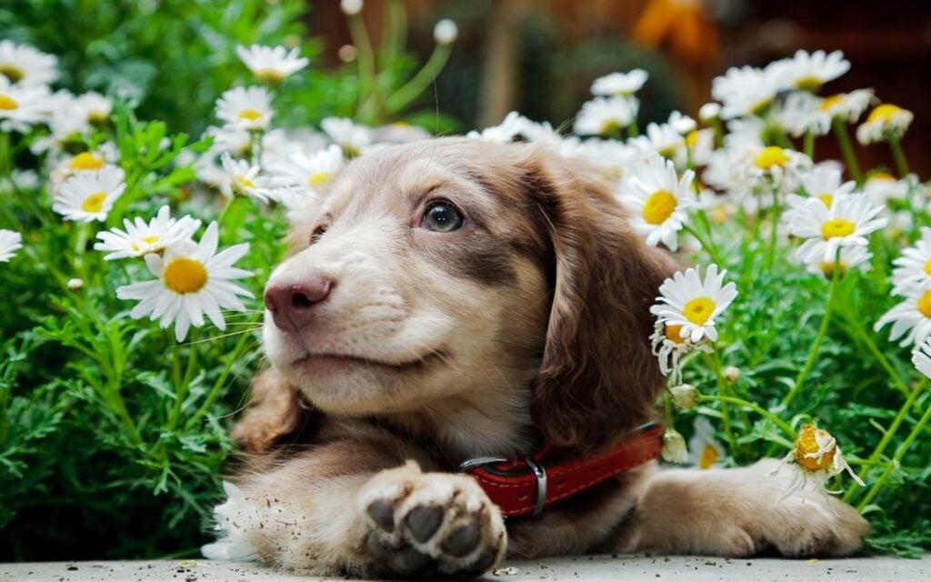 Cachorros grandes, cachorrinhos, cachorros velhos, cachorrinhos. Dê um passeio feliz com esses 14 lindos caninos sem sair de sua mesa com este tema gratuito para papéis de parede do windows 10.