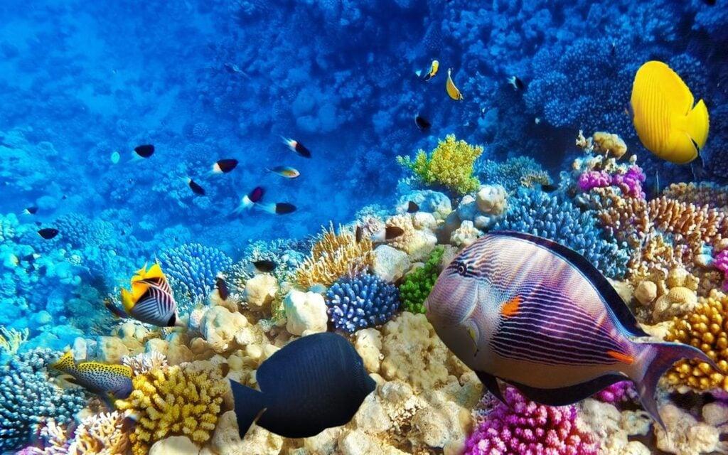 Essas fotos coloridas de recifes de coral e dos peixes que vivem neles incluem fotos de meia-água que combinam o subaquático e a paisagem em imagens únicas.
