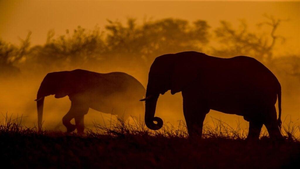 Acompanhe os passos dos fotógrafos da revista national geographic durante uma viagem para capturar a beleza da vida selvagem africana. Este conjunto premier de 12 imagens 4k é grátis para os temas para windows 10.