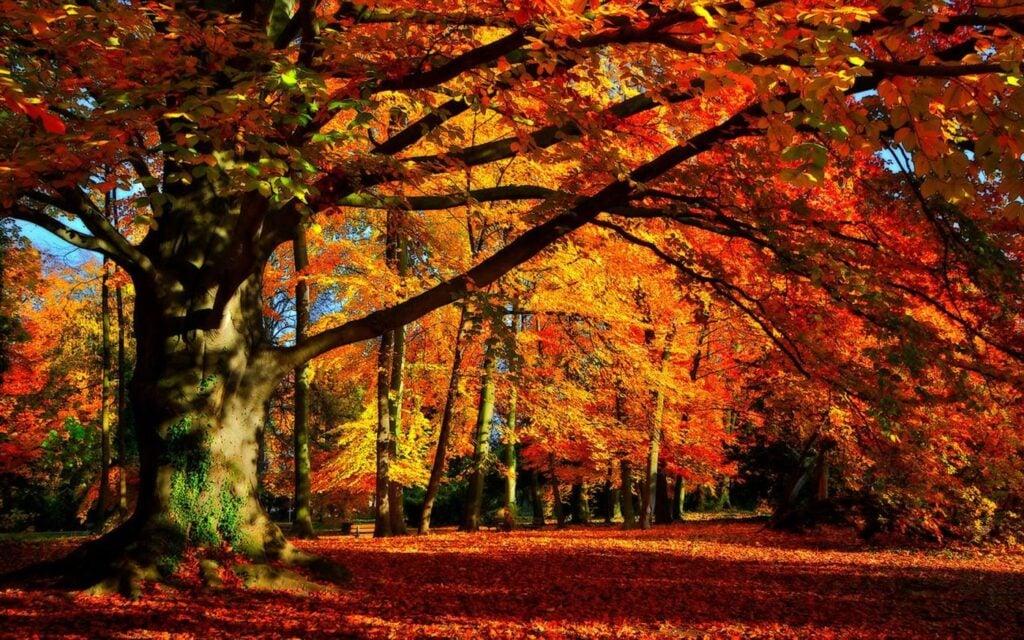 Vá espiando a folha direto da sua área de trabalho. Bétulas douradas, estradas rurais em cores vivas e folhagem de outono brilhante são espetaculares e relaxantes neste conjunto de temas gratuito de 17 temas para windows 10.