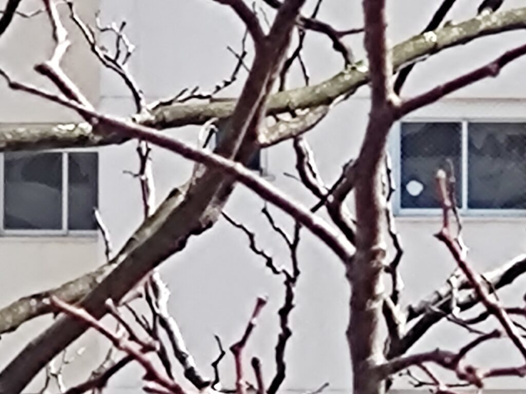 Teste de câmera zoom 30x