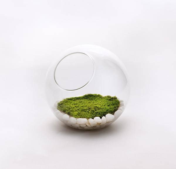 Musgos serão sua nova vela-aromática, filtro de ar e lâmpada