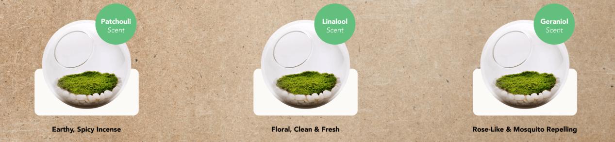 cheiros moss - Musgos serão sua nova vela-aromática, filtro de ar e lâmpada
