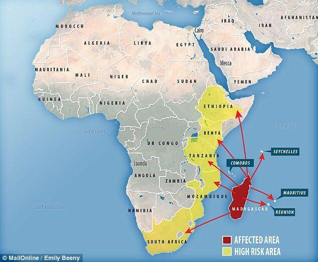 Madagascar sofre com o surto de peste negra mais perigoso dos últimos 50 anos