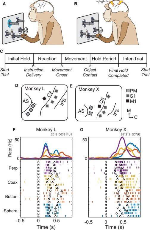 """monkey brain research resize md - Cientistas injetam e reorganizam """"informações"""" em cérebros de macacos"""