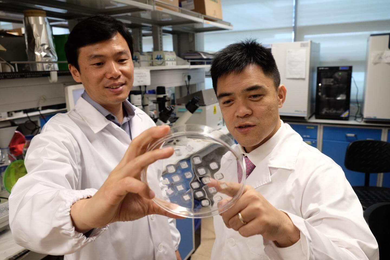 Incrível: novo adesivo é capaz de emagrecer e combater a obesidade
